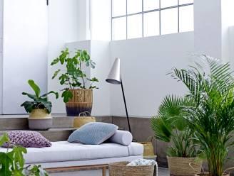 Trend: 7 nieuwe manieren om groen in huis te brengen