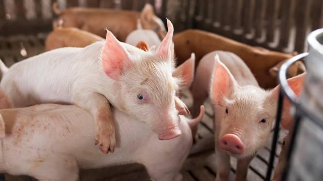 Varkensorganen in mensen weer stap dichterbij