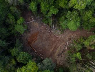Illegale boskap in Brazilië flink gestegen in april