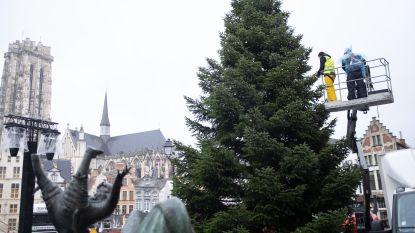Grote kerstboom op Grote Markt gecompenseerd door 130 aanplantingen