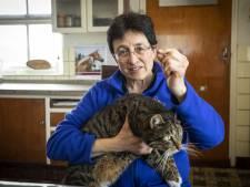 12 katten van dierenarts uit Haarle van de aardbodem verdwenen: 'Afgeschoten'