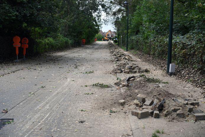 Adieu bomen in de Populierenlaan. De bomen vernielen de voetpaden en moeten weg.
