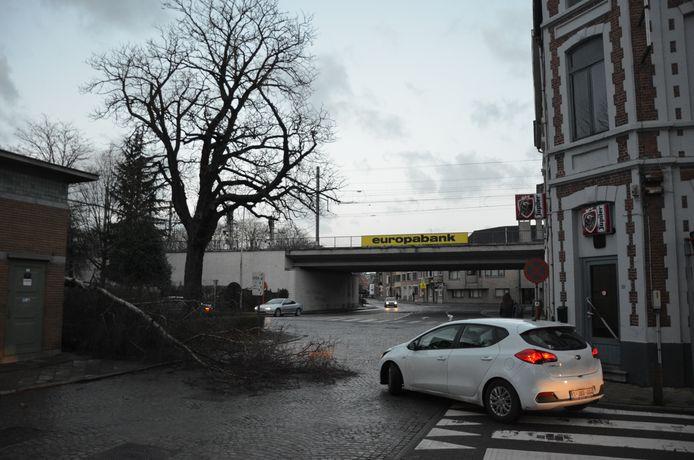 De boom ging tegen de vlakte ter hoogte van het tramhuisje op het Stationsplein.