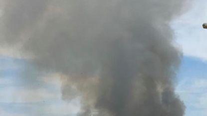 """Brandweer blust bosbrand in Lommel: """"Zeer intensief om te blussen met deze temperaturen"""""""