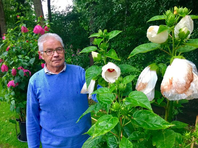 Bennie Grashof bij zijn speciaal voor de Flora Ootmarsum gekweekte hibiscus.
