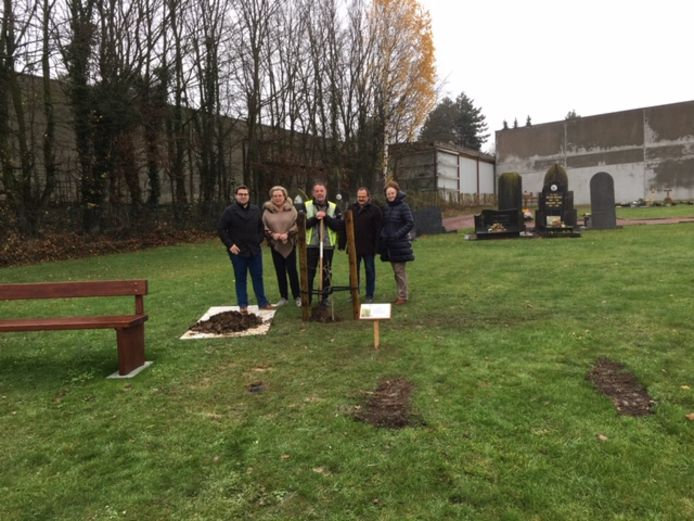 De bijzondere boom van 'Mayors for Peace' staat op het centrale kerkhof in Wortegem.