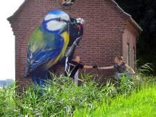 Pimpelmees geeft kleur aan trafohuisje in Dinteloordse buitengebied