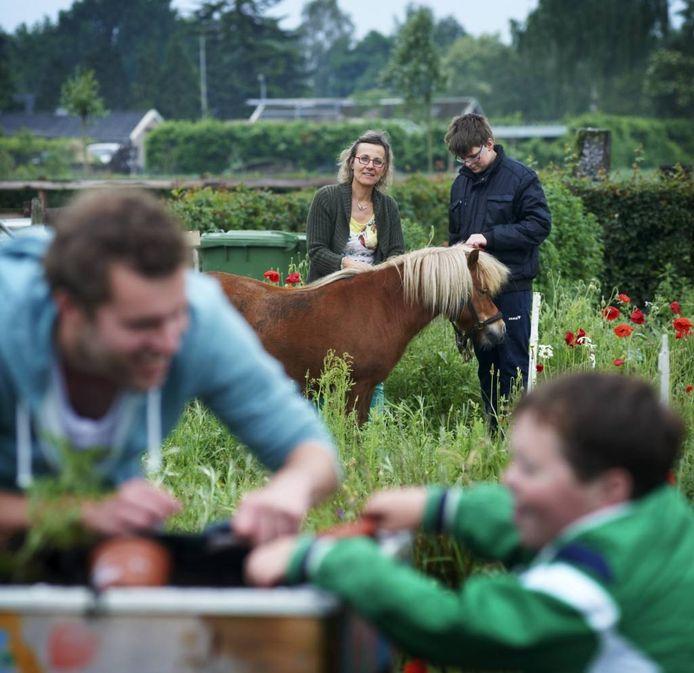 Hennie van den Biggelaar, van Japara in Erp, verzorgt een pony samen met Robin.