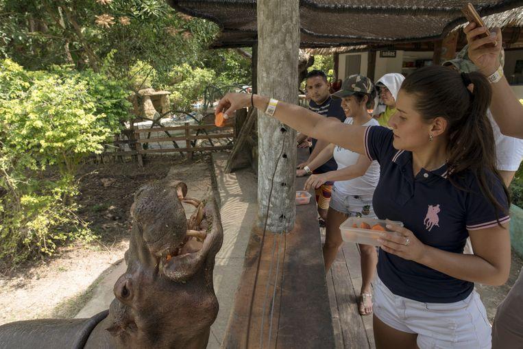 Een bezoeker voedert een nijlpaard in het Hacienda Napolès Park in Puerto Triunfo, Colombia. Beeld AP