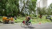 Stad wil 'wandelverbod' in parken bij stormweer