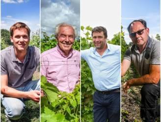 """Vier West-Vlaamse wijnboeren over de oogst van 2020: """"Een uitstekend wijnjaar, mét dank aan de klimaatverandering"""""""