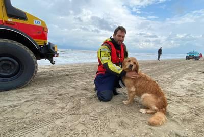 Hond zwemt 500 meter de zee in, maar heeft hulp reddingsbrigade Katwijk niet nodig