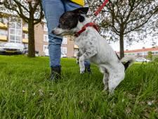 Gevonden hondenpootjes in Emmeloord waarschijnlijk afgehakt met mechanisch apparaat