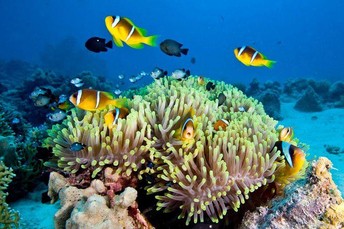 Koraalriffen sterven aan een razend tempo.