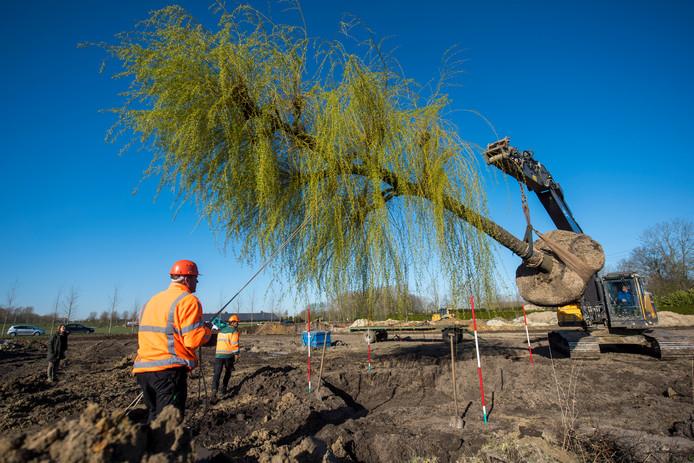 De eerste boom wordt geplant.
