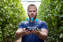 Dirk van Duijvenbode werkt ook nog altijd voor een auberginekwekerij in 's-Gravenzande.