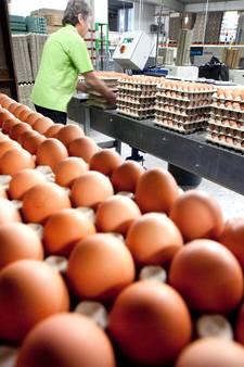Kippeneieren mogelijk vergiftigd met giftige stof fipronil