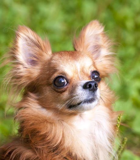 Vrouw (31) verdronk eigen hond en krijgt taakstraf
