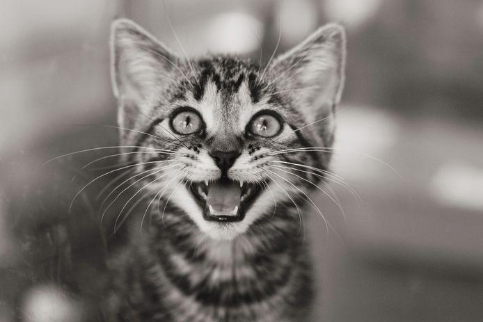Mensen bij wie later schizofrenie of andere ernstige geestesziekten werden vastgesteld, bleken als kind significant vaker een kat in huis te hebben gehad.