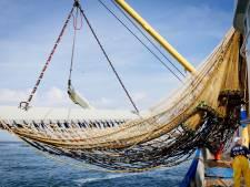 Natuurorganisaties boos over nieuwe visquota: Hoger dan wettelijk toegestaan