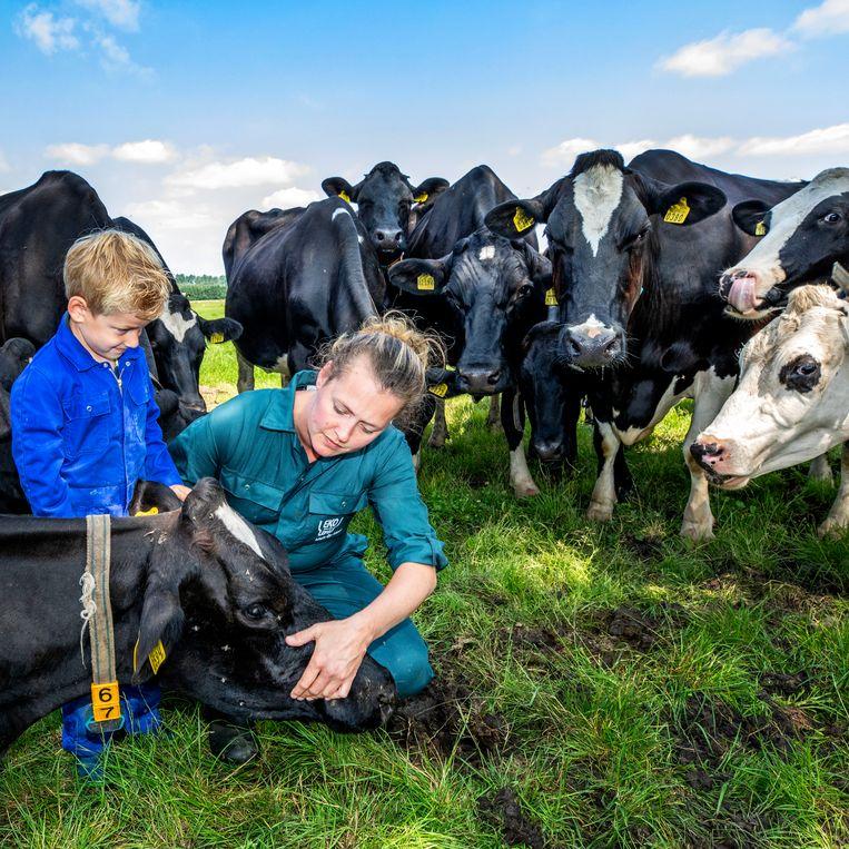 Daisy Cruijsen en de 5-jarige Stach bekijken de gesteldheid van koe 67. Deze koeien van de EKo boederij in Dreumel leveren melk aan Eko Holland. Beeld Raymond Rutting