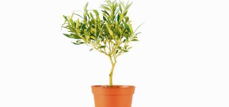 Exotische planten en de vorst? Dat vraagt om problemen