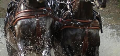 Vraagtekens bij subsidie voor paardenwedstrijd Driving Valkenswaard International