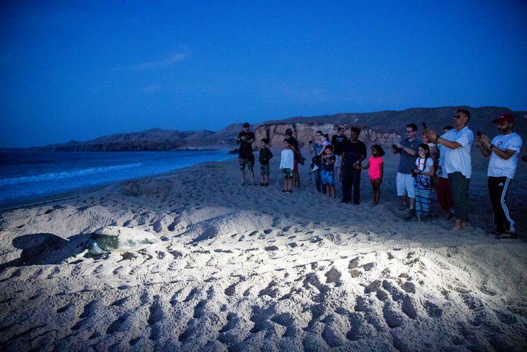 Op het strand van Ras Al Jinz leggen de zeeschildpadden hun eieren, gadegeslagen door toeristen. Beeld Marie Wanders