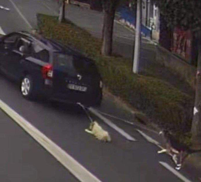 Een Fransman heeft twee honden zo'n 700 meter lang voortgesleurd door de straten van Charleville-Mézières. Naar eigen zeggen wist hij niet dat de honden aan zijn wagen hingen.