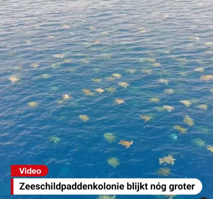 De grootste kolonie groene zeeschildpadden ter wereld blijkt bijna twee keer groter te zijn dan gedacht.