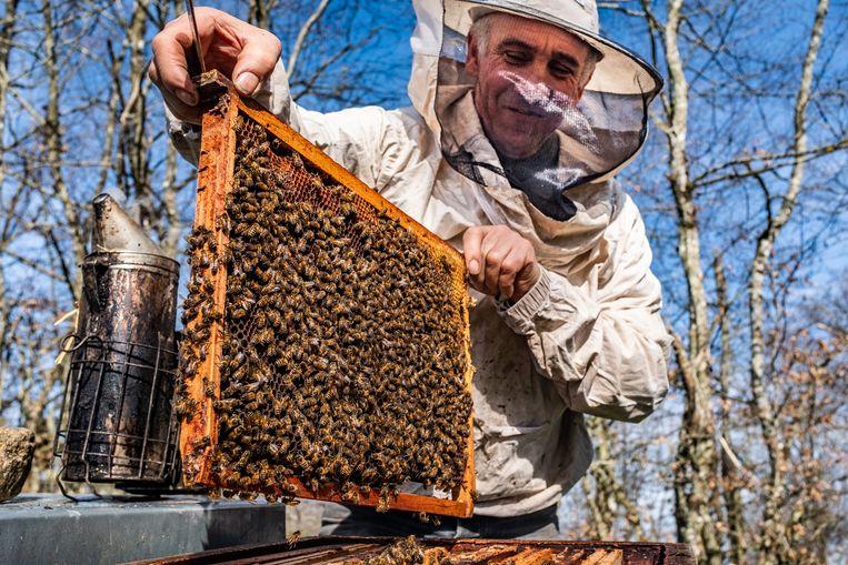 Imker Pascal Vignaud uit Marrault laat zijn bijen zien. Beeld Joris Van Gennip