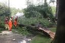 Afgebroken tak dwars over de weg in Son en Breugel