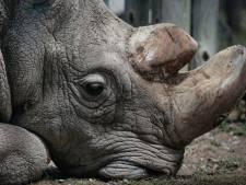 Neushoorn Sudan, de laatste in zijn soort, is niet meer