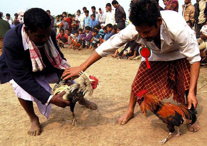 Een hanengevecht in India in 2004.