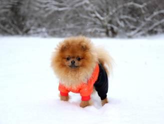 Met deze tips loods je jouw huisdier veilig de koude winter door