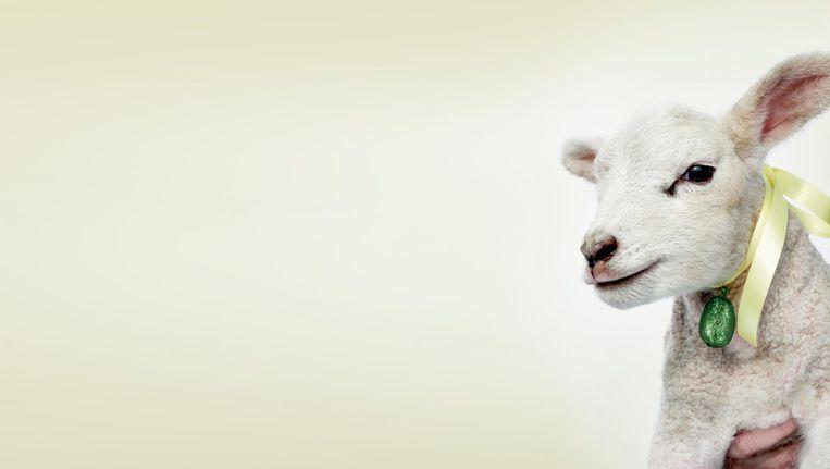 De speurtocht staat dit jaar in het teken van schapen en lammetjes Beeld Rein Janssen
