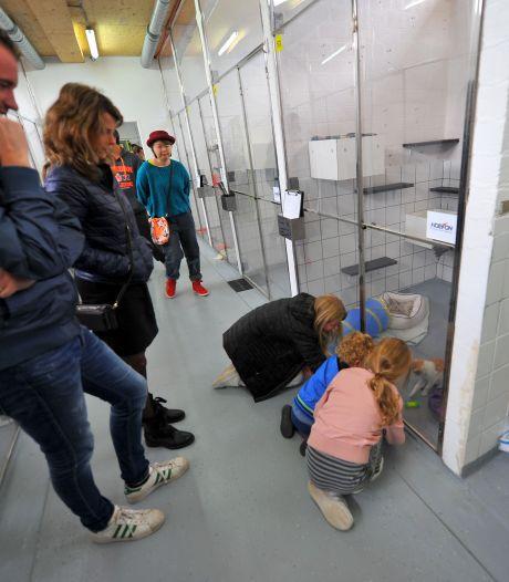 'Dierenbescherming moet tarief voor asiel op tafel leggen'