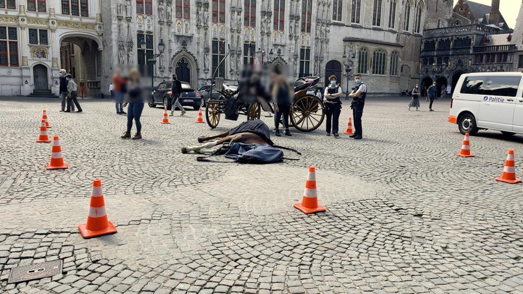 Het koetspaard Tinka (17) stuikte plots in elkaar tijdens haar eerste ritje zaterdagvoormiddag. De doodsoorzaak is onbekend.