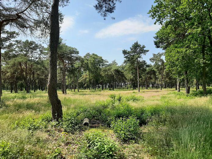 In het bosgebied  tussen de Oude Deventerweg en Tunnelweg in Haarle is een nieuw chaletpark gepland. De geplande uitrit op de Tunnelweg zorgt inmiddels voor veel discussie.