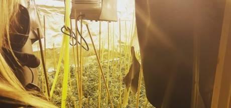 Agenten stuiten in woning Westervoort op 170 wietplanten die klaar waren voor de oogst