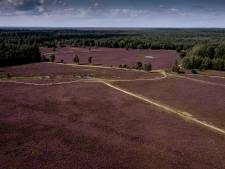 Woeste Veluwe heeft veel aan mensenhand te danken: 'Mooiste natuur dankzij milieurampen'
