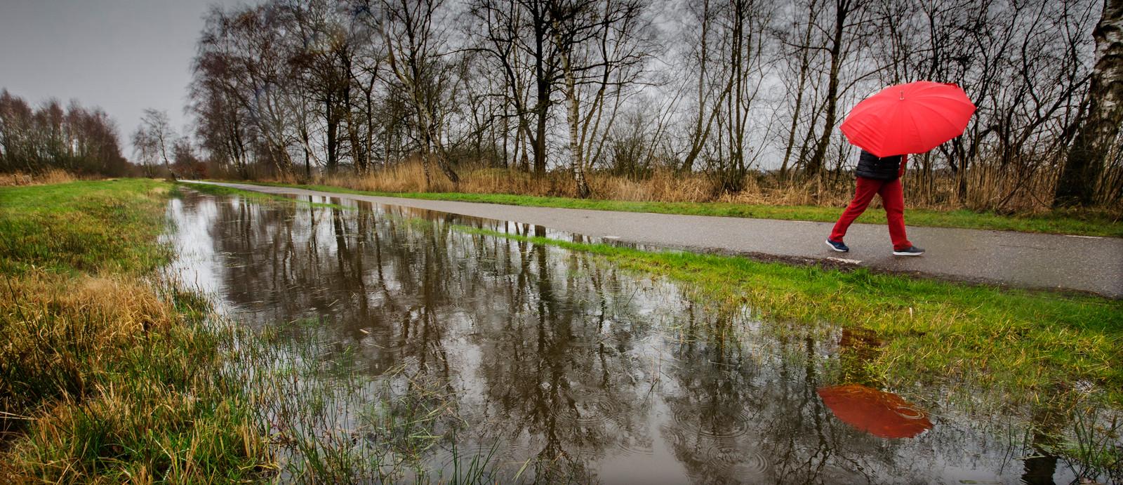 Alleen in geval van ernstige regenval, zoals hier, is het waterpeil in de Bossche Broek hoog genoeg.