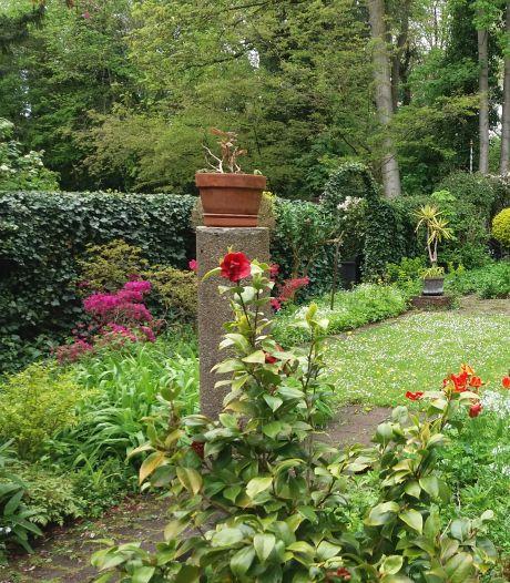 Delftse Open Tuinendag nog in een coronajasje, maar: 'De klaproos komt altijd weer boven'