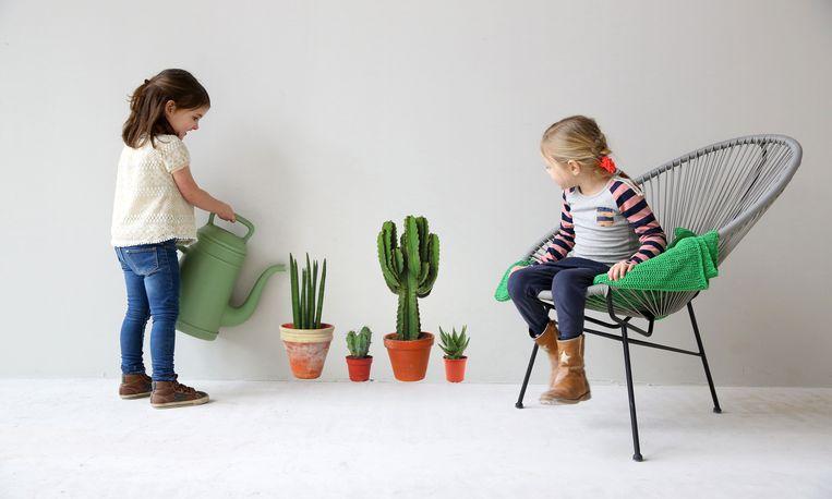Deze cactussen hoeven écht geen water