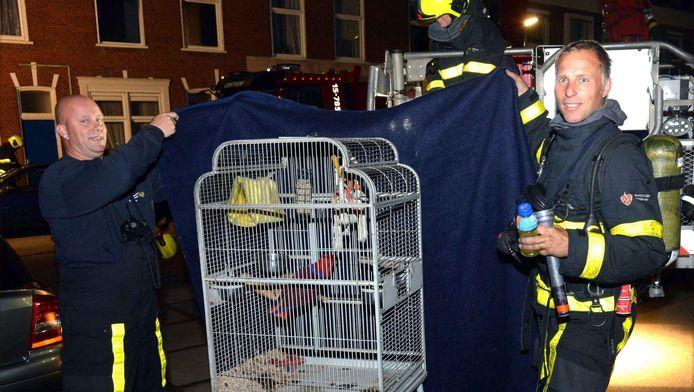 Niet alleen de bewoners werden gered, ook de vogel kon levend aan de brand ontkomen.