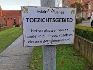 Zes gemeentes in Mandelstreek in toezichtsgebied na uitbraak vogelgriep in Waregem