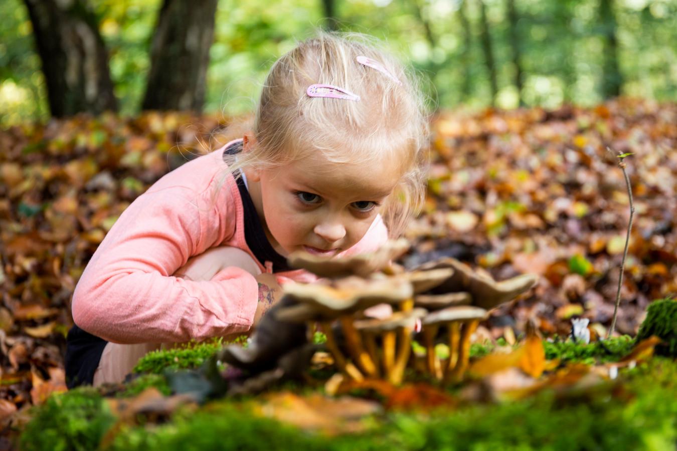 Paddenstoelen zoeken in het bos tijdens de herfstvakantie.