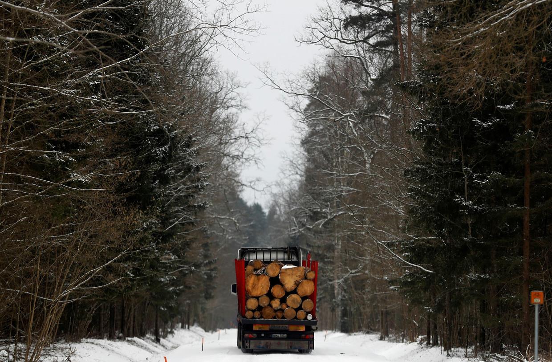 Het Poolse ministerie zegt dat het bomen in het oerbos wil kappen om de wegen toegankelijk te houden.  Beeld REUTERS