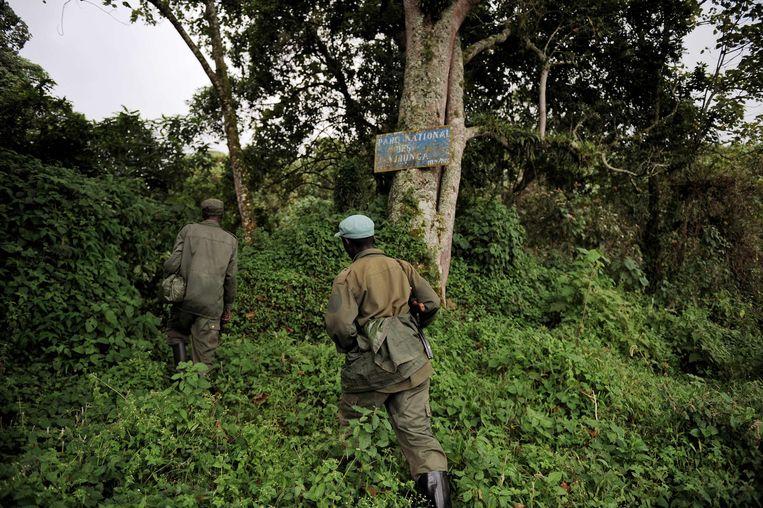 Parkwachters op zoek naar een groep gorilla's in Virunga Nationaal Park. Beeld AFP
