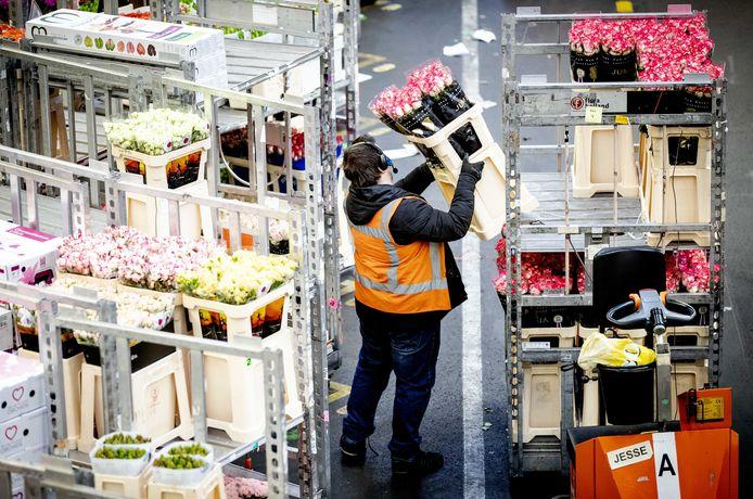 Dankzij een nieuwe samenwerking van bloemenveiling Royal FloraHolland met drie transporteurs moeten er minder vrachtwagens nodig zijn om de bloemen te vervoeren.